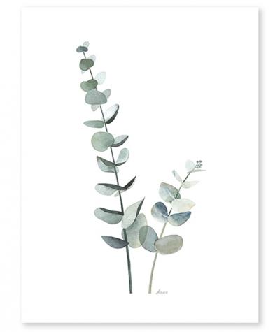 Lilipinso Poster, Eukalyptusstiele